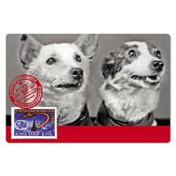 BELKA and STRELKA Russian SPACE DOG Cosmos Real Photo Russian Unposted Postcard