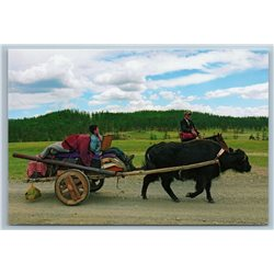 2011 ASIA MONGOLIA Moving to summer Pastures Yak Bull Russian Photo Postcard