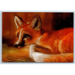RED FOX Wild Animal New Unposted Postcard